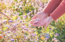 Free Lavender, Lilac, Purple, Flower Royalty Free Stock Photo - 132861345
