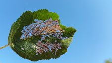 Free Leaf, Sky, Biome, Tree Royalty Free Stock Images - 132861489