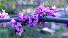 Free Plant, Flower, Flora, Purple Stock Images - 132861654