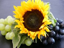 Free Sunflower, Flower, Yellow, Sunflower Seed Stock Photography - 132861942