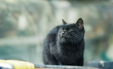 Free Selective Focus Photo Of A Black Cat With Its Eyes Closed Stock Images - 132944844