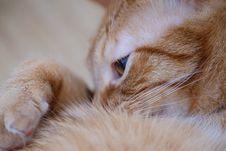 Free Close-up Photo Of Orange Tabby Cat Lying On Its Hand Stock Image - 132945121