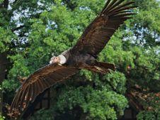 Free Bird, Bird Of Prey, Eagle, Fauna Royalty Free Stock Images - 132948839