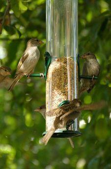 Free Bird, Fauna, Ecosystem, Bird Feeder Stock Images - 132948964