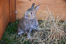 Free Fauna, Rabbit, Mammal, Domestic Rabbit Royalty Free Stock Images - 132949029
