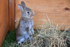 Free Fauna, Mammal, Rabbit, Domestic Rabbit Stock Photo - 132949040
