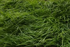 Free Grass, Plant, Grass Family, Sweet Grass Royalty Free Stock Photo - 132949405