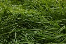 Free Grass, Plant, Grass Family, Sweet Grass Stock Images - 132949434