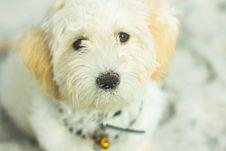 Free Dog, Dog Breed, Dog Like Mammal, Puppy Stock Photography - 132949952