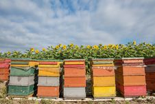 Free Yellow, Apiary, Beehive, Outdoor Structure Stock Photo - 132950190