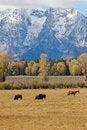 Free Tetonpasture Royalty Free Stock Photography - 1330377