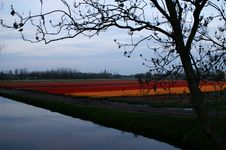 Free Orange And Red Tulips In Lisse, Holland Stock Photography - 1330612