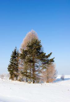 Free Winter Landscape Stock Photo - 1332350