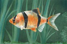 Free Fish Stock Image - 1333141