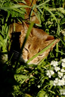 Free Cat In The Grass Royalty Free Stock Image - 1333296