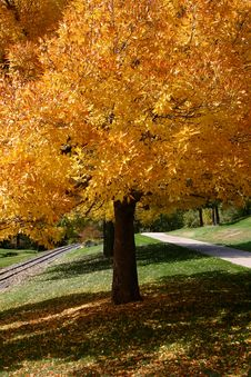 Free Tree Changing Colors Stock Image - 1334971