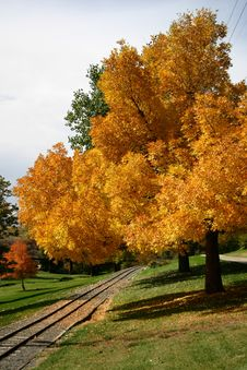 Free Autumnal Trees By Rail Track Royalty Free Stock Photo - 1335015