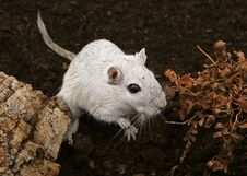 Free White Female Rodent Outdoors Stock Photo - 1337950