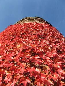 Free Ivy Tower Royalty Free Stock Photo - 1337995