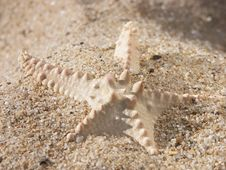 Free Starfish On Sand Stock Photography - 1339402
