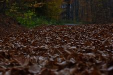 Free Close-Up Photo Of Dried Leaves On Ground Stock Images - 133049474