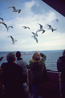 Free Flying Seagulls Over Body Of Water Royalty Free Stock Photography - 133049497