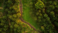 Free Top View Photo Of Unpaved Road Surrounded By Trees Royalty Free Stock Photos - 133049608