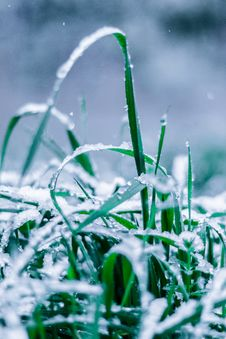 Free Close-Up Photo Of Wet Grass Royalty Free Stock Image - 133252606