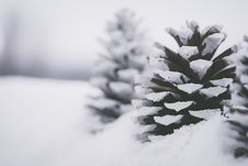 Free Close-Up Photo Of Snow Covered Pine Cones Stock Photography - 133252652