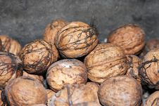 Free Walnuts Stock Photography - 13346352