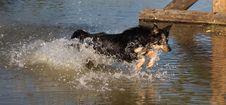 Free Dog, Water, Dog Like Mammal, Dog Breed Group Stock Image - 133462661