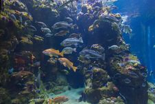 Free Ecosystem, Coral Reef, Marine Biology, Reef Royalty Free Stock Photos - 133462998