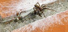 Free Spider, Arachnid, Invertebrate, Arthropod Stock Images - 133463464