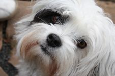 Free Dog, Dog Breed, Dog Like Mammal, Nose Stock Image - 133463491