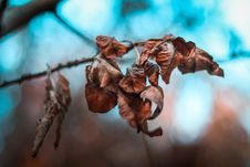 Free Close-up Photo Of Dried Leaves Royalty Free Stock Image - 133489066