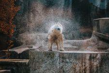 Free Polar Bear Drying Wet Fur Stock Image - 133489141