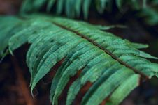 Free Close-up Photography Of Fern Plants Royalty Free Stock Photography - 133489197