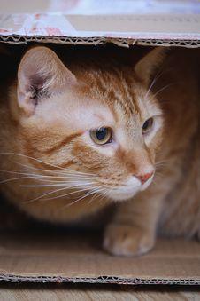 Free Orange Tabby Cat Inside Cardboard Box Royalty Free Stock Images - 133489229