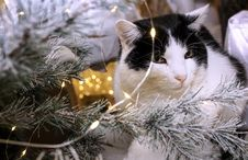 Free White And Black Cat Beside Christmas Tree With String Lights Stock Photography - 133489412