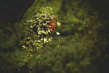 Free Green Leafed Plant In Brown Plastic Pot Stock Photography - 133489422