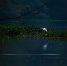 Free Photo Of A Heron On Body Of Water Stock Images - 133489774