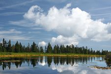 Free Forest Reflection Royalty Free Stock Photos - 13356558