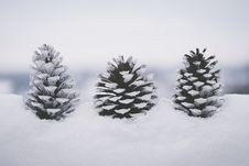 Free Snow Covered Pine Cones Royalty Free Stock Photo - 133728715