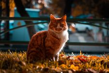 Free Selective Focus Photography Of A Tabby Cat Stock Images - 133728824