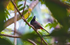 Free Bird Resting On Tree Branch Royalty Free Stock Images - 133728889