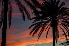Free Silhouette Photo Of Palm Trees During Dawn Royalty Free Stock Photography - 133728987