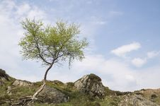 Free Green Tree On Mountain Under White Clouds And Blue Skies Royalty Free Stock Photos - 133729338
