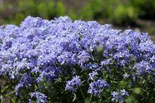Free Plant, Flower, Flora, Bellflower Family Royalty Free Stock Images - 133773319
