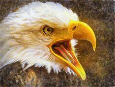 Free Beak, Bird, Bird Of Prey, Eagle Stock Images - 133774334
