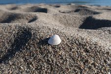 Free Sand, Rock, Seashell, Material Stock Image - 133774491